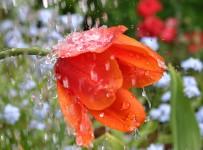 Если в день свадьбы идет дождь примета.